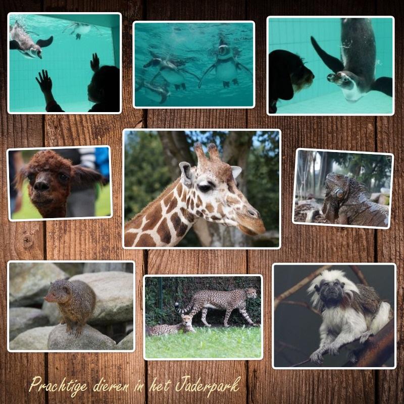 dieren-collage
